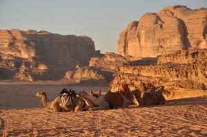 PIX Oman kamelen en woestijn1000xa