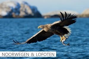 Noorwegen & Lofoten Click