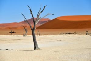 SST Namibie Dead Vlei1000x
