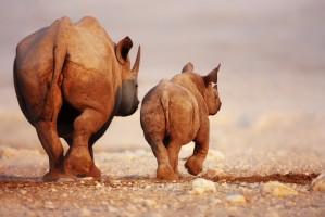 SST Namibie neushoorns1000x