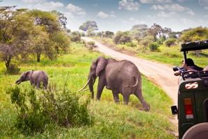 SST Safariauto en olifanten