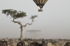 SST Zebras ballon