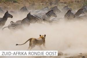Zuid-Afrika Rondje Oost click